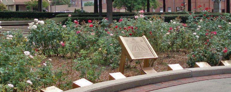 World Peace Rose Garden